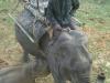 our-elephant
