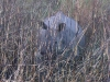 rhino-in-elephant-grass