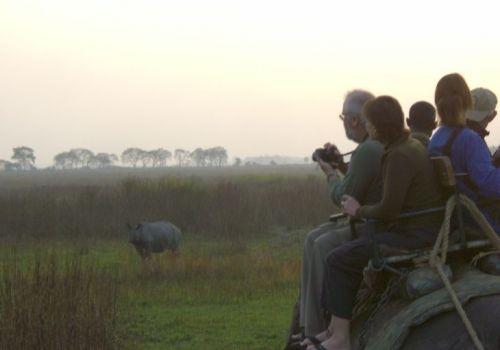 Kaziranga National Park Photos