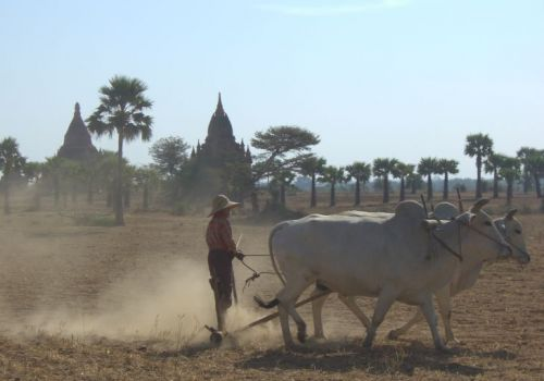 Bagan Culture, Still Alive