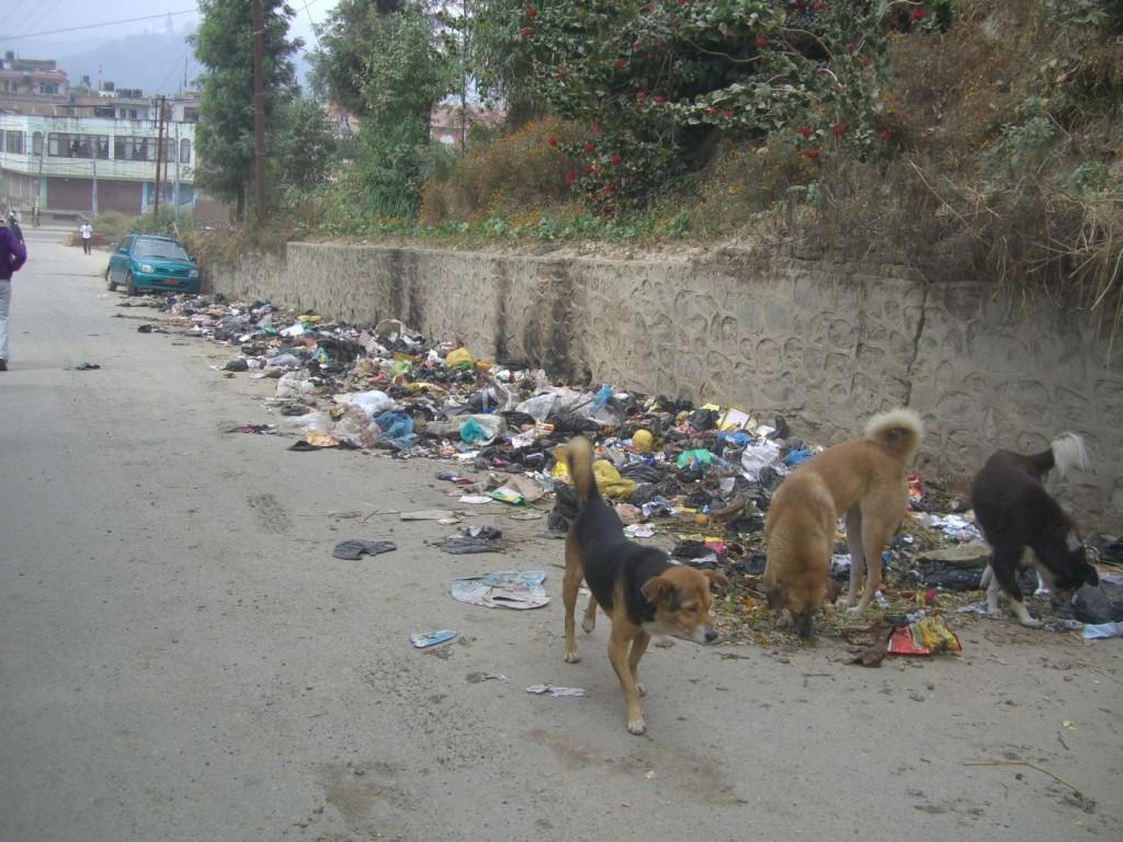 kathmandu dogs and garbage